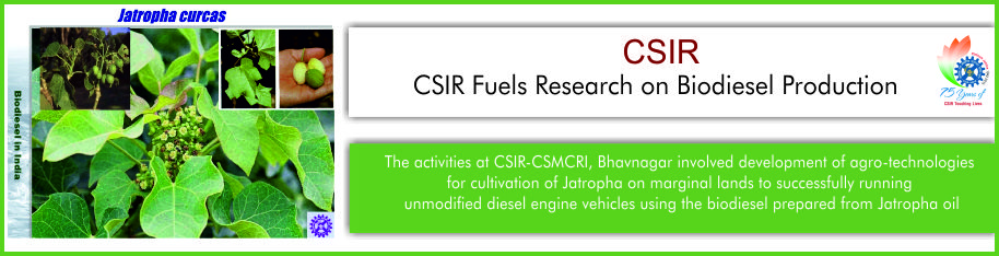 Csir Fuels Research On Biodiesel Production  Mygov Blogs Nature Has It All Whether It Is Food Fibre Fuel Or A Drug Formulation  Nature Has An Answer To All Our Needs It Is Only The Judicious Use Of The  Myriad